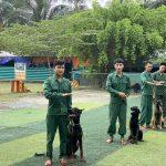 Huấn luyện chó cảnh, chó nghiệp vụ chuyên nghiệp